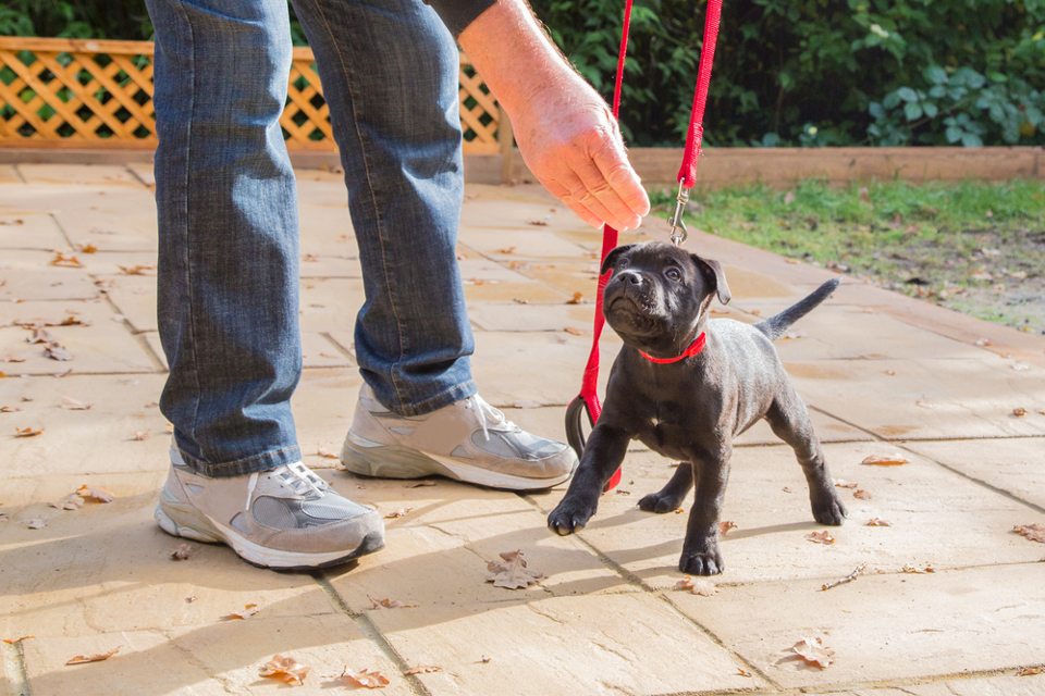 Dog-Training Quick Tricks for Your Furry Friend's First Holiday